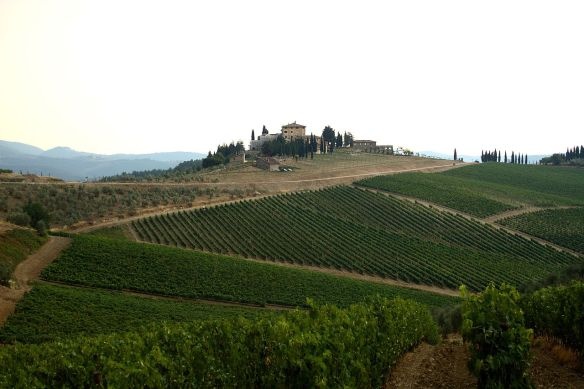 1280px-Vineyards_in_Chianti_Country